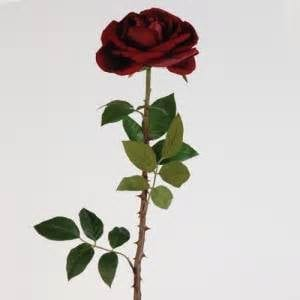 image-roses